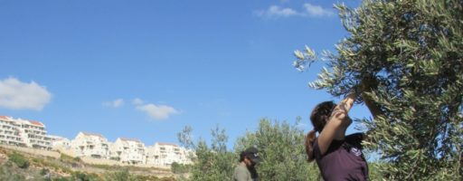 JAI' Keep Hope Alive – Olive Tree Campaign